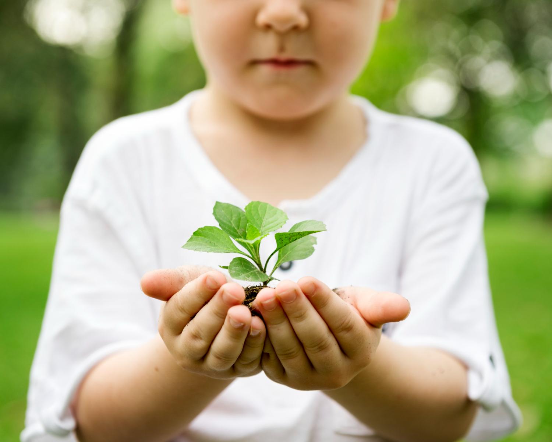Fotografia colorida de menino (criança) segurando uma muda de planta. No fundo, um parque, cheio de natureza.